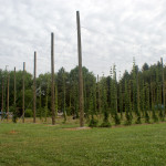 Little Miami Farms - Ohio Hops