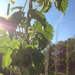 Little Miami Farms - Amy Forsthoefel -- 2014-07-04.jpg
