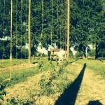 Little Miami Farms - Amy Forsthoefel -- 2014-12-13.jpg
